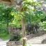 garden-pagola_11